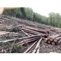 Bûcheron et travaux forestiers